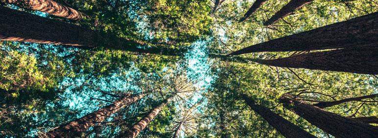Principales obligaciones medioambientales para las empresas